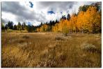 High Sierra Aspens