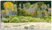 Textures of a Sierra-Nevada Autumn